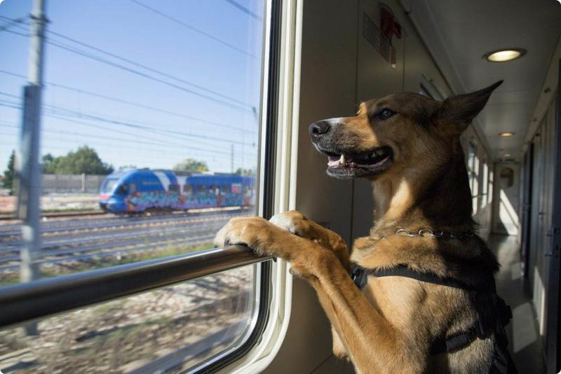 путешествие с животным