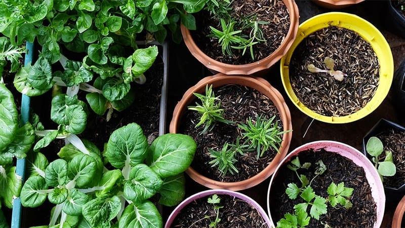 Стильний еко-город в домашніх умовах: поради щодо вирощування на невеликій площі