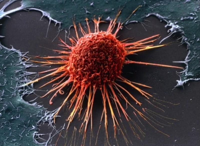 омоложение клеток организма