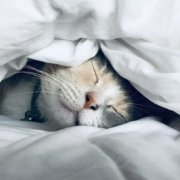 Переваги якісного нічного сну, про які ви, ймовірно, не знали