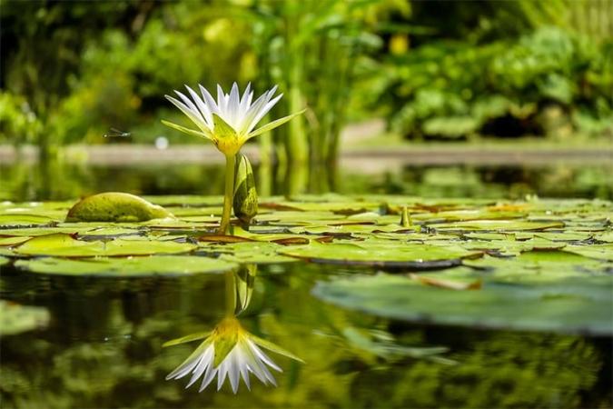 Как правильно выбрать растения для пруда?